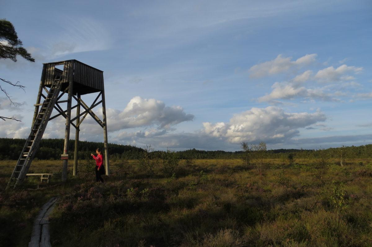 Zona sense arbres amb una petita torre per veure animals