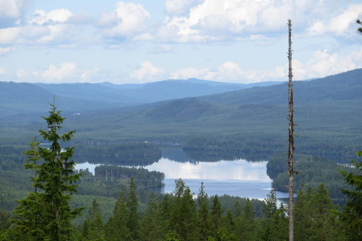 Paisatge de bosc i llacs vist de de dalt