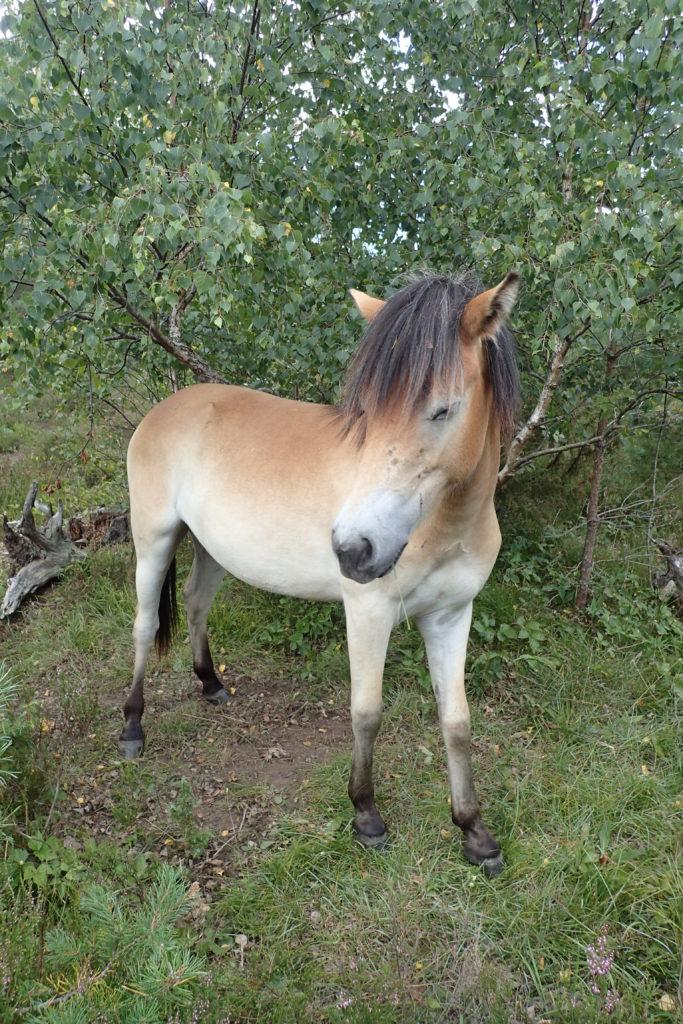 Cavall jovenet amb un pentinat molt divertit