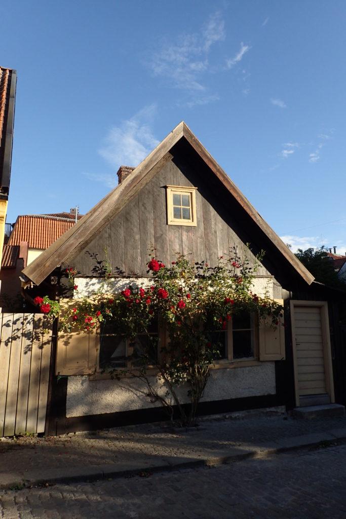 Façana d'una casa de Visby amb un gran roser al davant