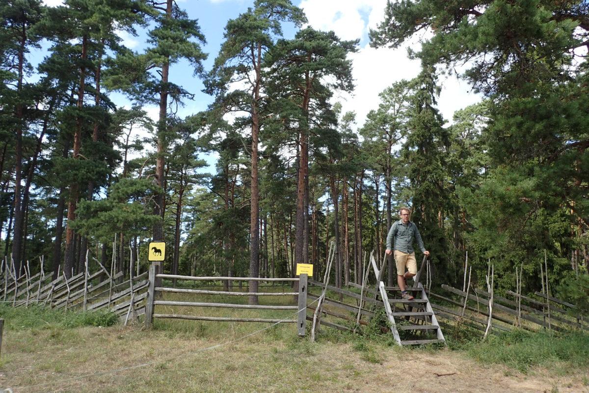 Dani creuant la tanca per accedir al recinte on estaven els cavalls.