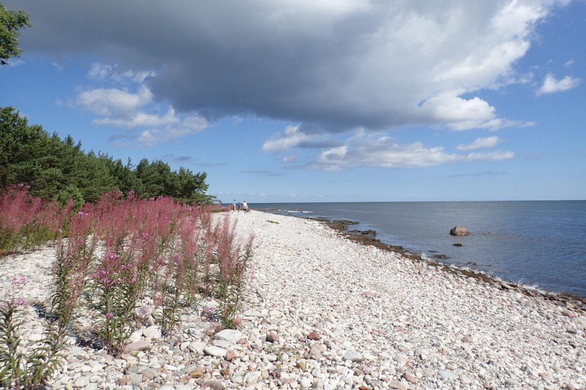 Vista de la platja, sense ningú i amb vegetació florida en primer terme