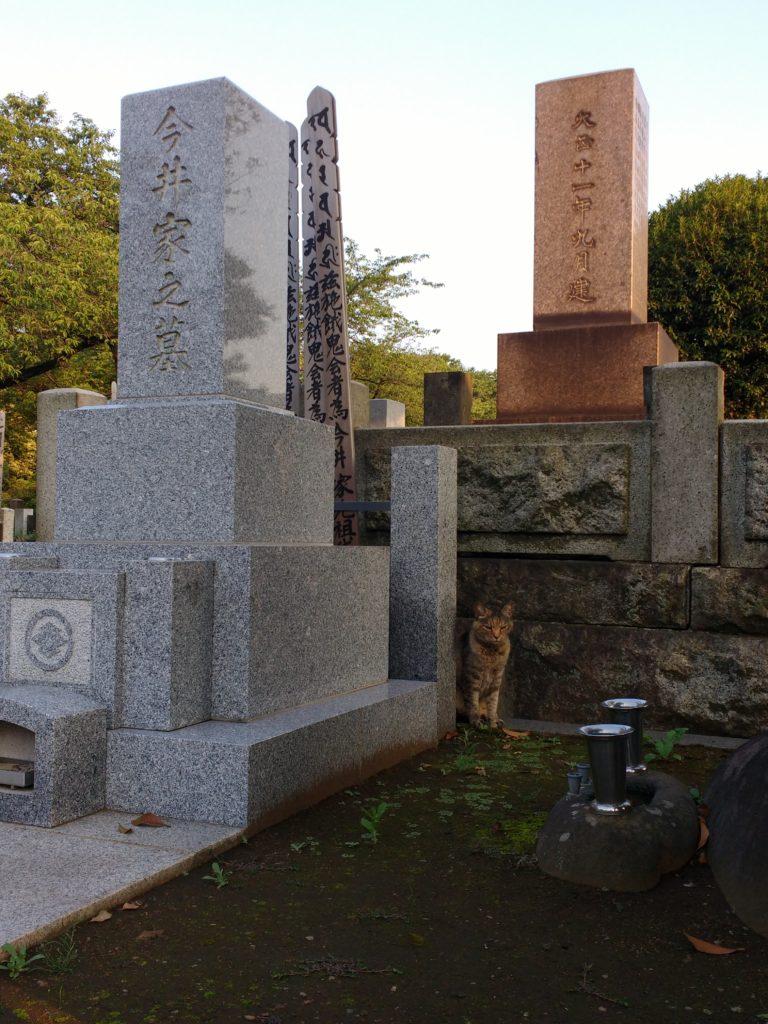 Tombes al cementiri de Yanaka amb un gat entre elles