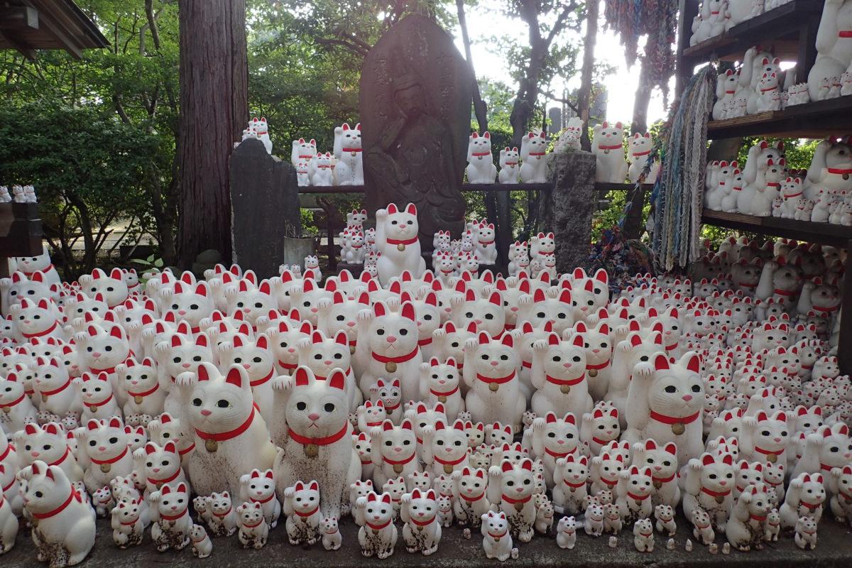 Ofrenes de moltíssims maneki nekos al temple de Gotokuji