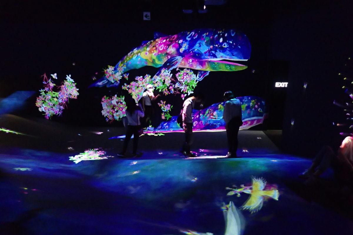 Projecció d'una balena gegant de molts colors