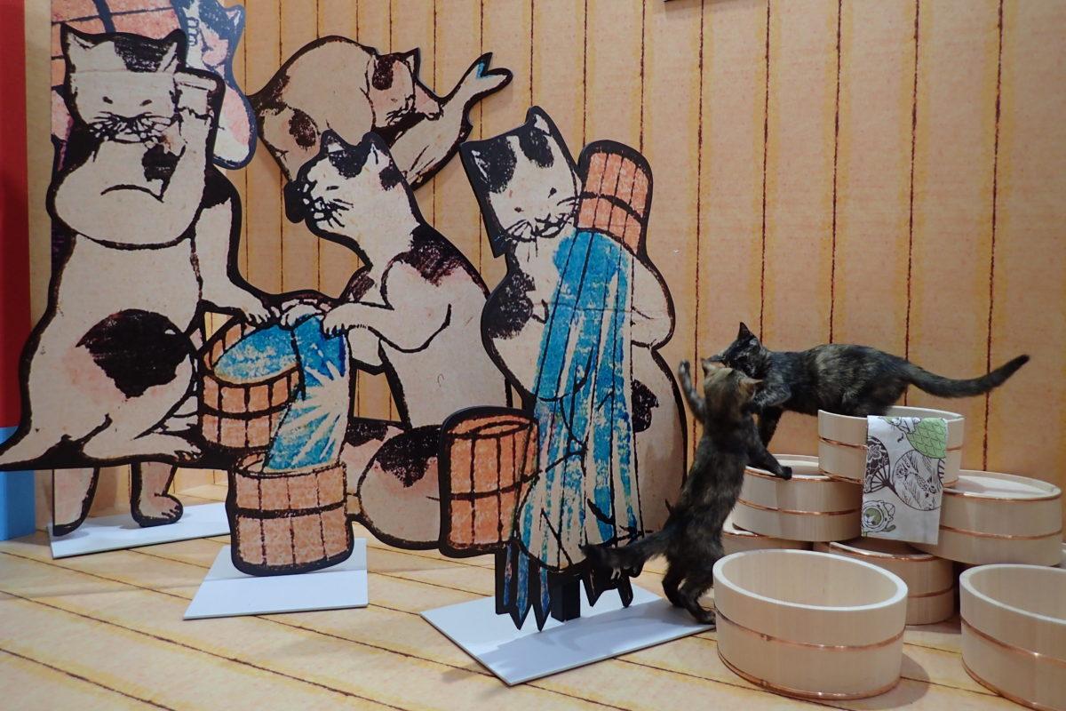 Gats joves jugant en un decorat que simula un espai de bany per a gats