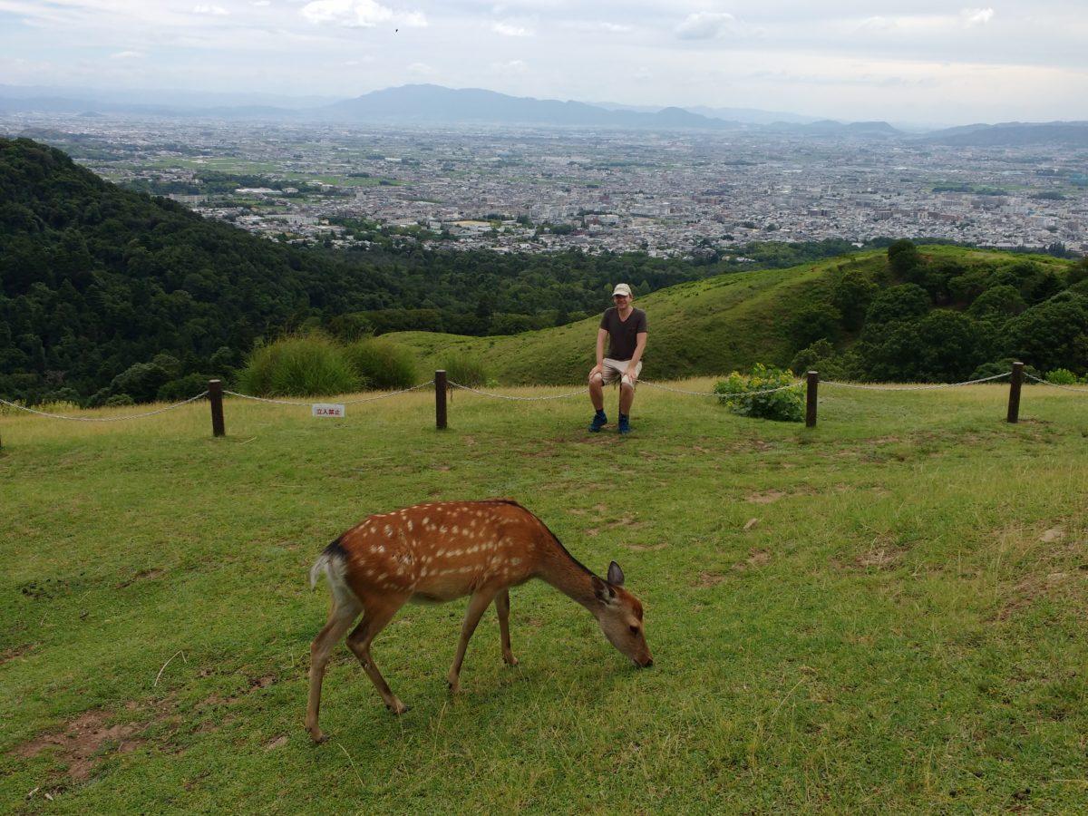 Vista de Nara des d'un prat amb un cérvol en primer terme
