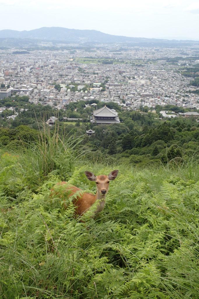 Vista de Nara des de dalt, amb un cérvol en primer terme
