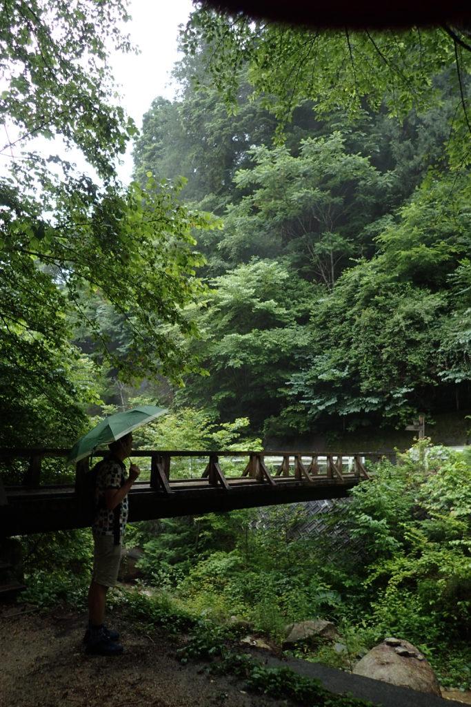 Pont enmig de la vegetació