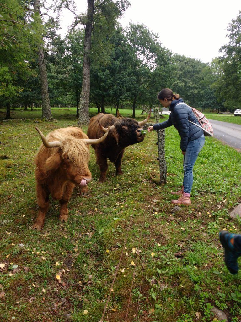 Ada donant de menjar a dos búfals