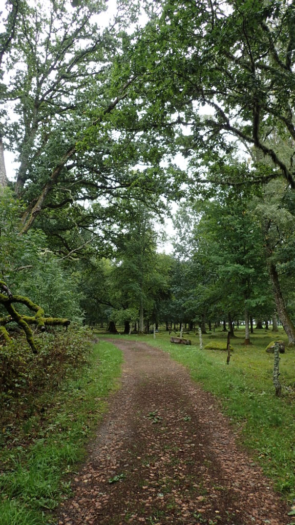 Camí entre la vegetació