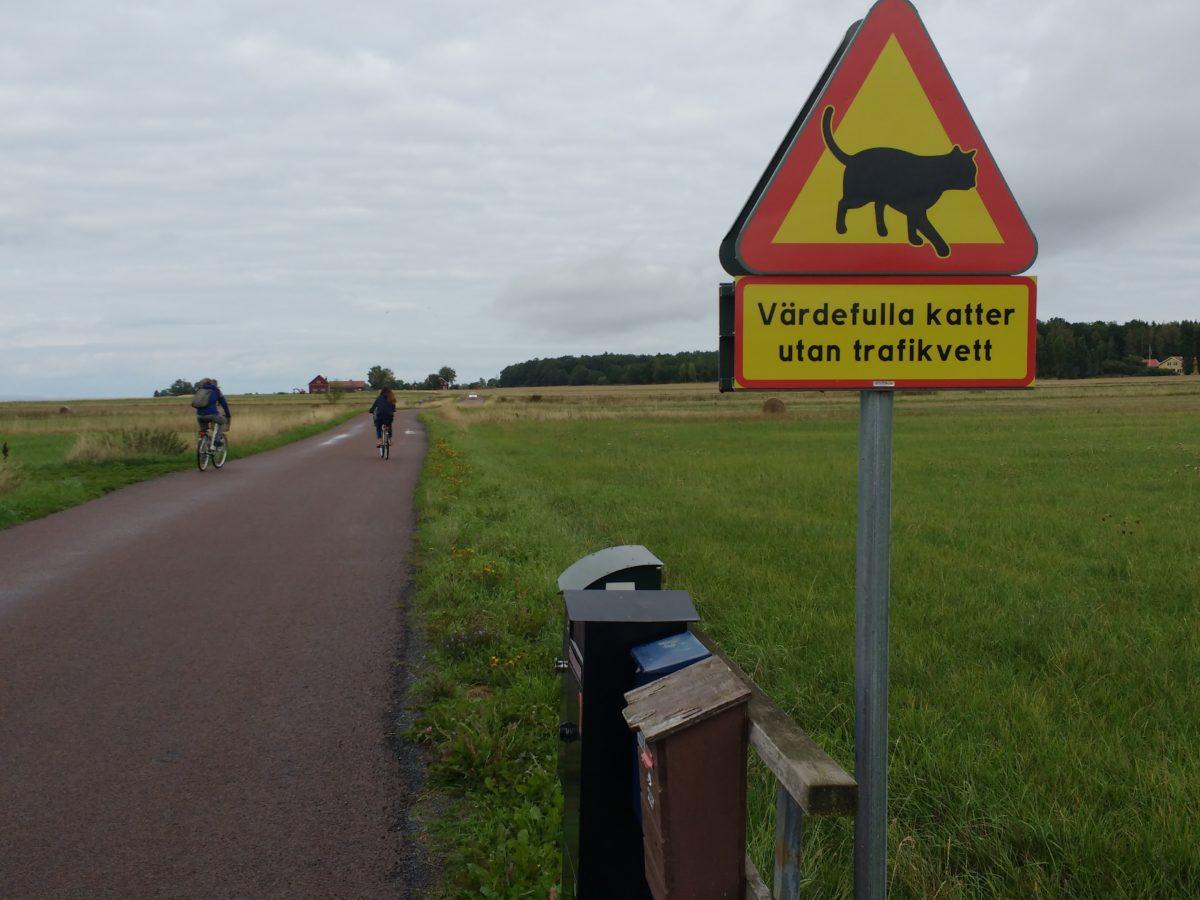 Camí amb senyal de perill on hi ha un gat