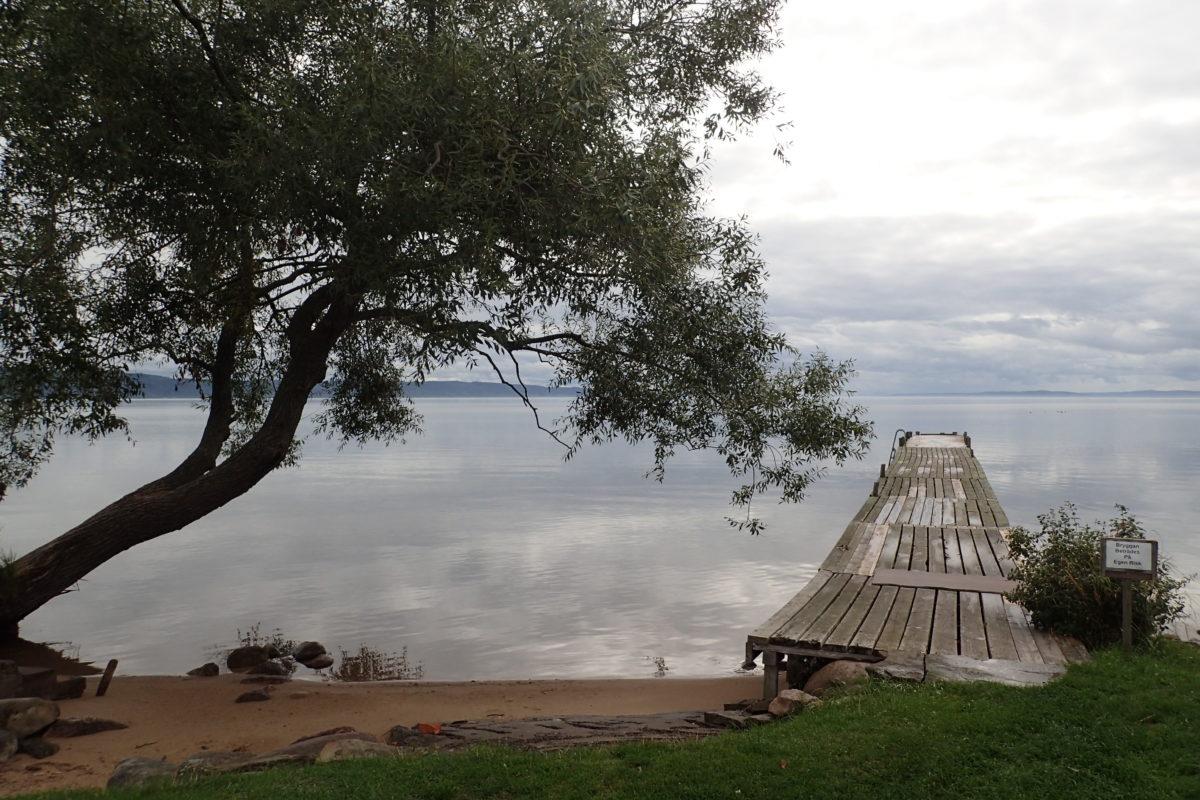 Vista del llac amb pasarel·la de fusra i arbre en primer terme