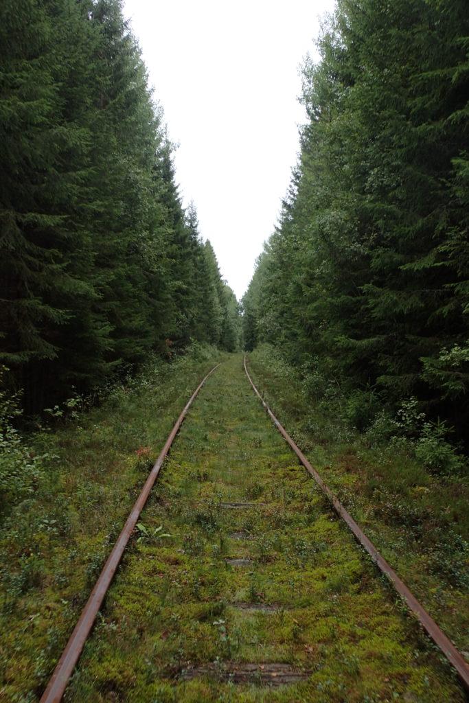 Via del dressin rodejada d'arbres