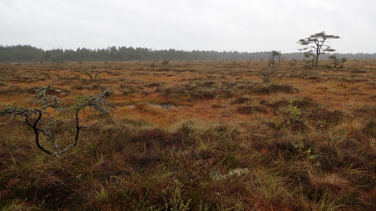 Vista del paisatge
