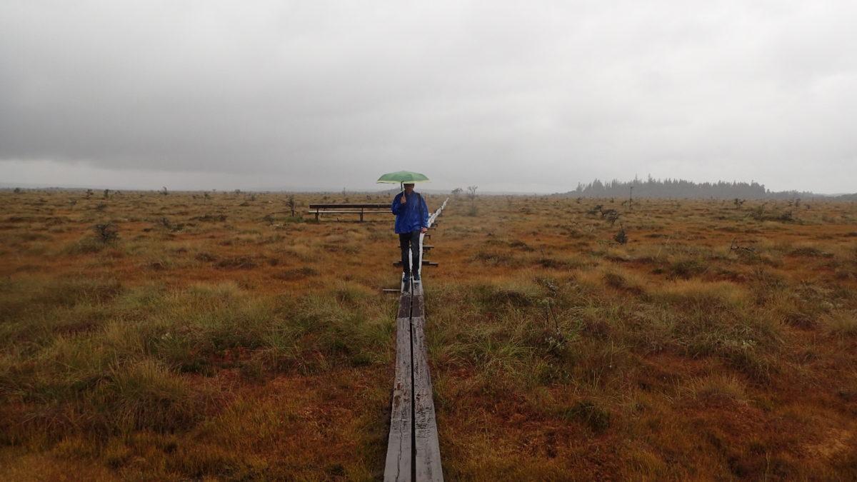 Paisatge molt ampli amb Dani amb el paraigües sobre pasarel·la de fusta, més a prop