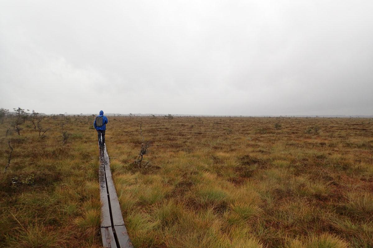 Paisatge molt ampli amb Dani caminant sobre pasarel·la de fusta