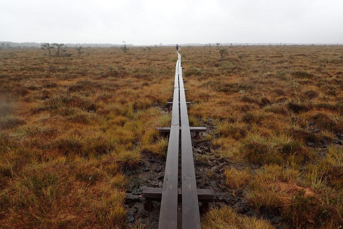 Paisatge molt ampli amb Dani caminant sobre pasarel·la de fusta, molt lluny