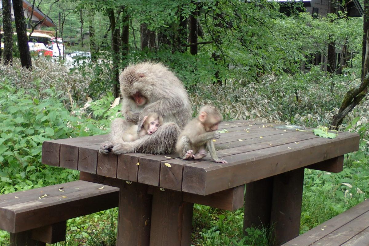 Mare mico amb dues cries sobre una taula