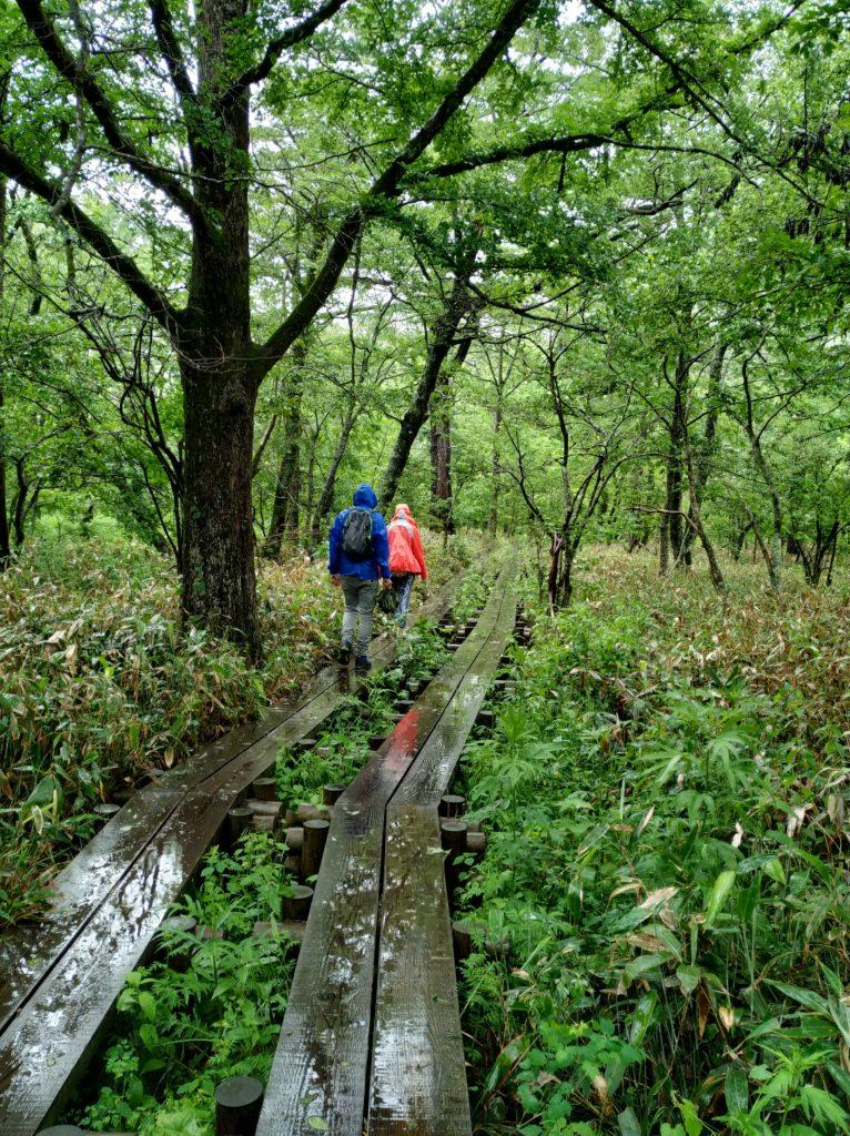 Caminant entre la vegetació per passarel·les de fusta
