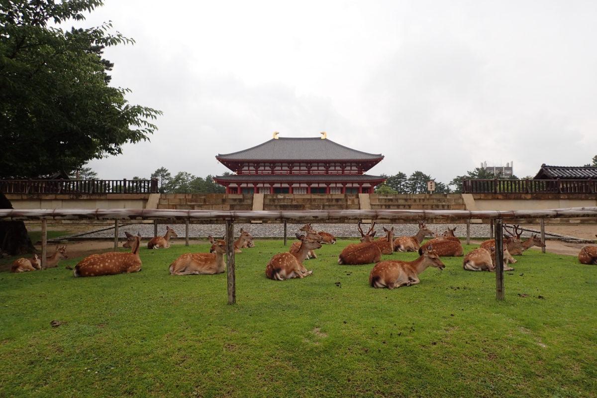Cérvols jaient sobre l'herba amb temple al fons
