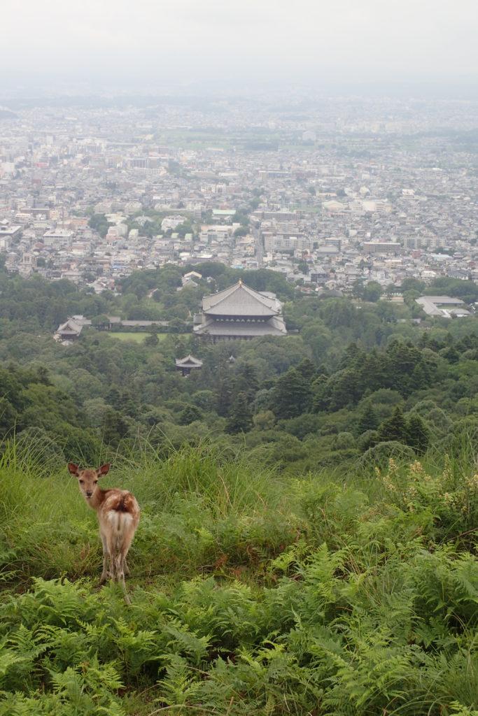 Vista superior de la ciutat de Nara amb un cérvol en primer terme