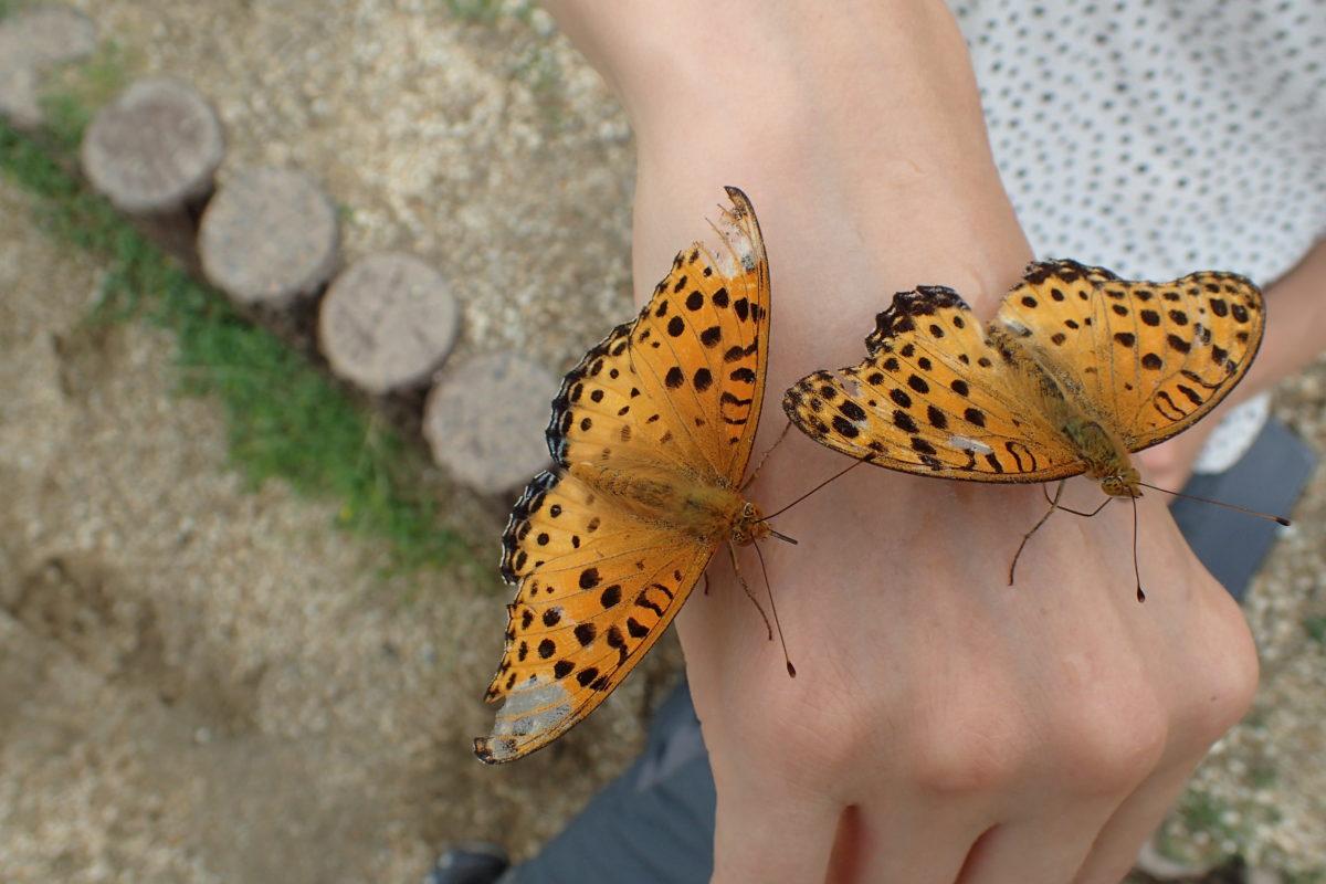 Dors de la mà amb dues papallones