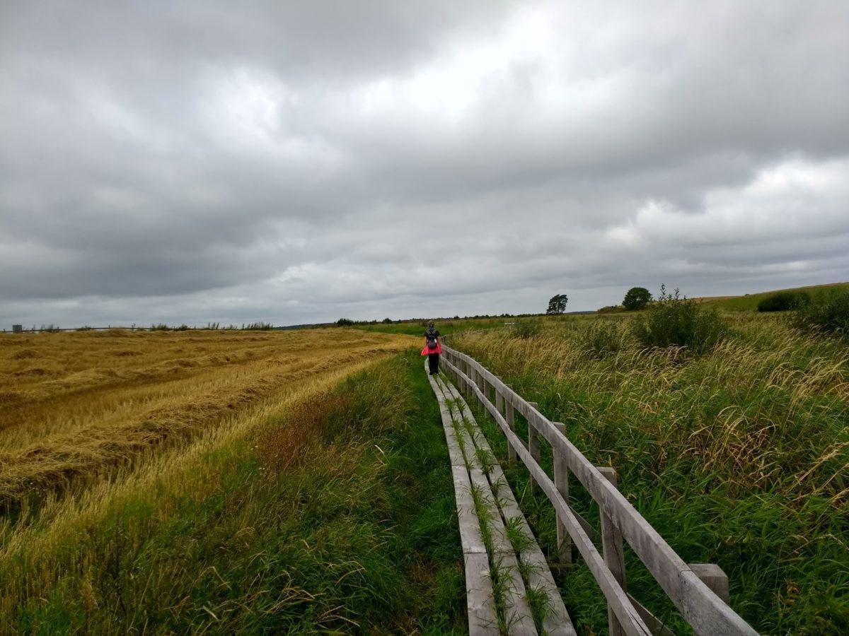 Passejant pel camí