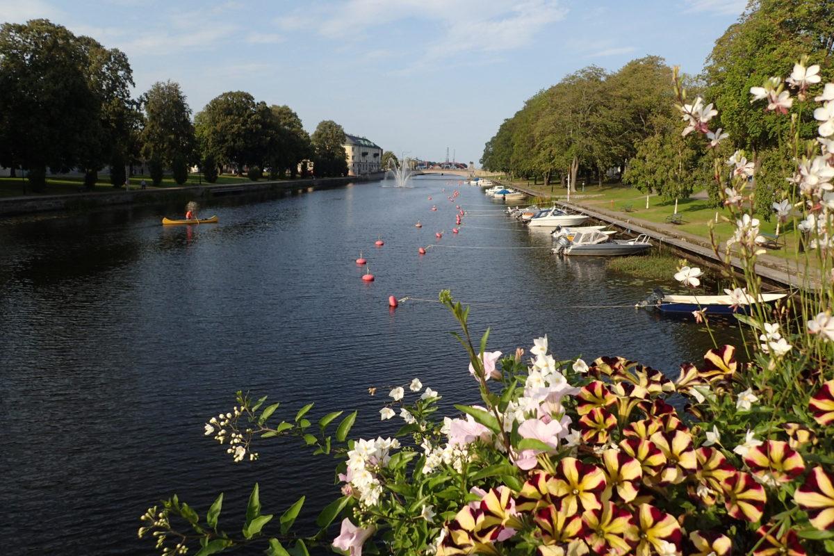 Vista del canal amb unes flors en primer terme