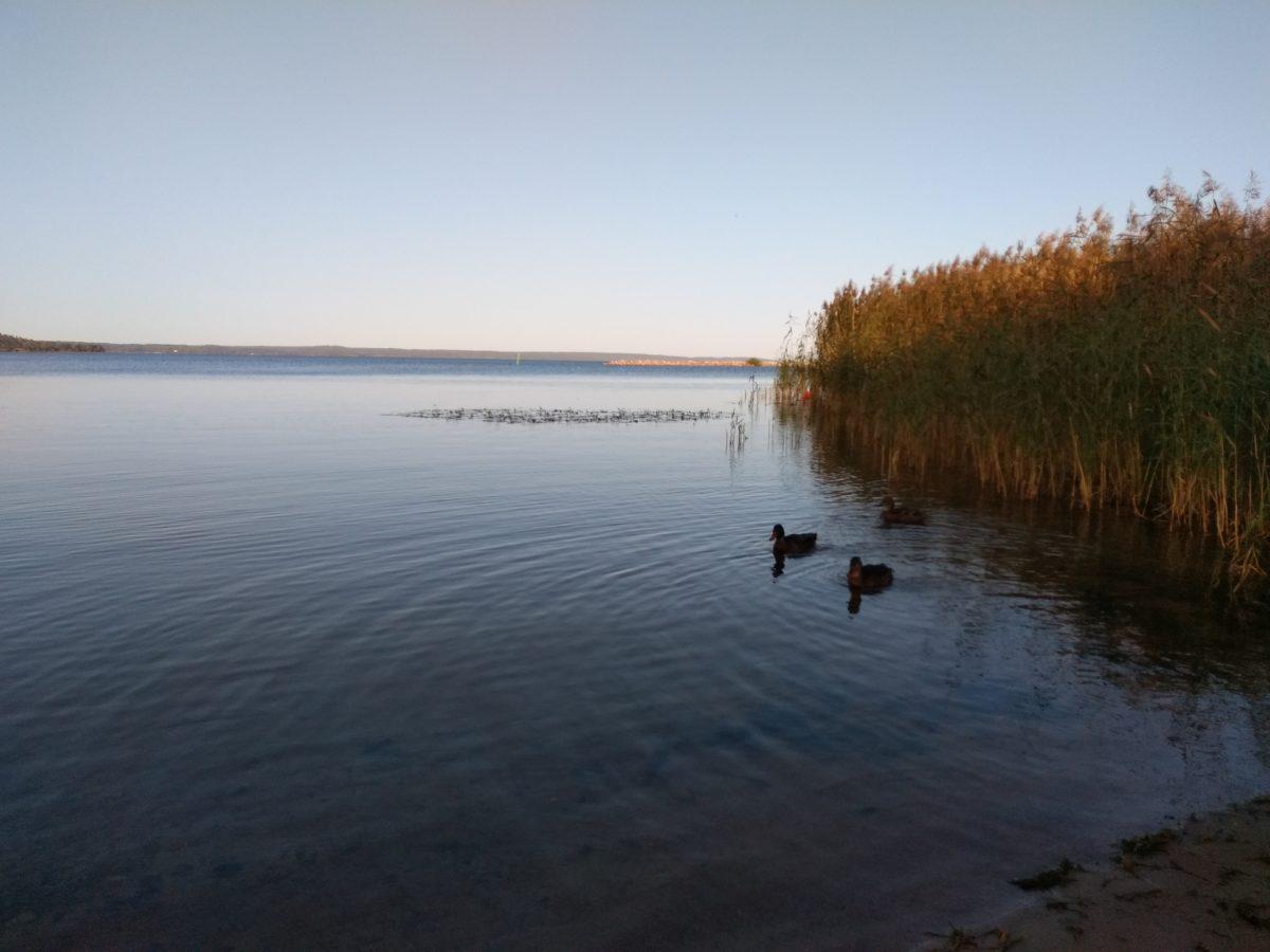 Vista del llac molt calmat amb uns ànecs banyant-s'hi