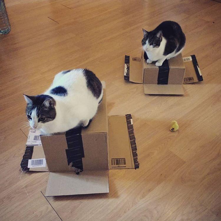 Dos gats sobre caixes d'Amazon Primer